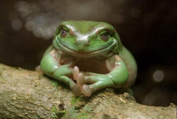 Neofrog